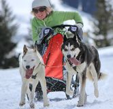 International race sled dogs, Mosses, Switzerland Royalty Free Stock Images