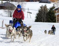 International race sled dogs, Mosses, Switzerland Stock Image