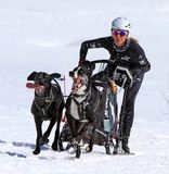 International race sled dogs, Mosses, Switzerland Royalty Free Stock Photo