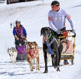 International race sled dogs, Mosses, Switzerland Royalty Free Stock Photography
