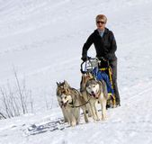 International race sled dogs, Mosses, Switzerland Royalty Free Stock Images
