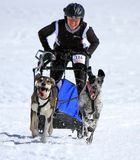 International race sled dogs, Mosses, Switzerland Stock Images