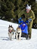 International race sled dogs, Mosses, Switzerland Stock Image
