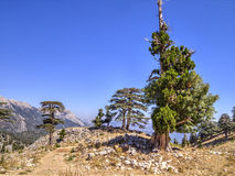 Plateau of Mount Tahtali, Turkey Royalty Free Stock Images