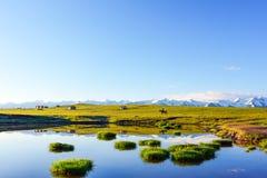 Plateau obszar trawiasty z Pogodnym niebieskim niebem i śnieżnymi górami Fotografia Royalty Free