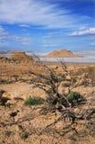 Plateau Oust-Ourt, saksaul sec Photos stock