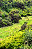 Plateau of Parque natural de Madeira Royalty Free Stock Images