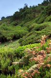Plateau of Parque natural de Madeira, Madeira isla Stock Photos