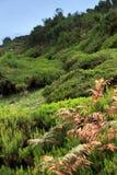 Plateau of Parque natural de Madeira, Madeira isla Stock Photos
