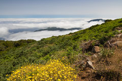 Plateau Paul da Serra in Madeira island Royalty Free Stock Photos