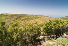 Plateau Paul da Serra in Madeira Royalty Free Stock Photo