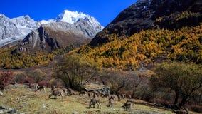 Plateau scenery Stock Image