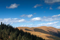 Plateau scenery. Altitude of over 4000 meters of altitude forests is another round of scenery Stock Photos
