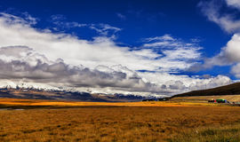 Plateau of the sky grassland Royalty Free Stock Photos