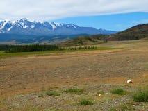 Plateau Ukok, mountain Altai Stock Photo