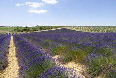 The plateau Valensole Royalty Free Stock Images