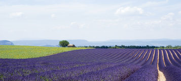 The plateau Valensole Royalty Free Stock Photo