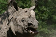 Plated rhinoceros Royalty Free Stock Photography