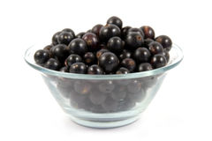 Plateful of black currant Stock Photography