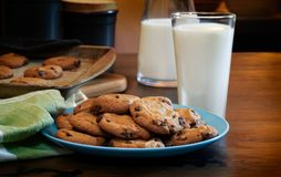 Plate of warm chocolate chip cookies and glass of milk. Plateful of chocolate chip cookies fresh and warm out of the oven with cold glass of milk on rustic wood Royalty Free Stock Image