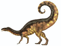 Plateosaurus Dinosaur Tail. Plateosaurus was a prosauropod herbivorous dinosaur that lived in the Triassic Age of Europe Stock Photography