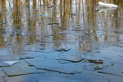 The plates are on the thin ice of the river water spring. Spring. Break in the water and on the ice floes visible reflection of trees Stock Photos