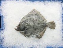 Platijas crudas frescas en el hielo para la venta en el mercado local en Ibiza, balneario imagen de archivo