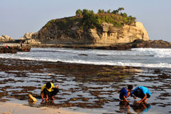 Plating a sand in Klayar Beach, Pacitan Stock Photos