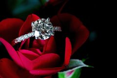 Platinum Diamond Ring On Red Rose royalty free stock photo