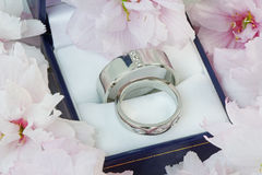 Platinum Wedding Rings. Close up of a pair of platinum wedding rings in a box Stock Image