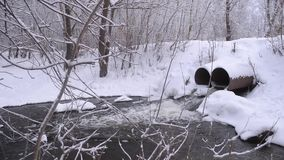 Platinum in winter forest, stream of water from melting snow, trees covered with snow. stock video