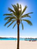 Platja de Alcudia海滩在马略卡马略卡 免版税库存照片