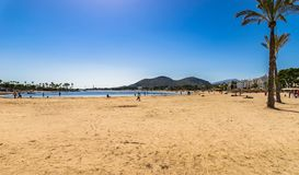 Spain Majorca, sand beach with palm trees at seaside of bay of Alcudia stock image