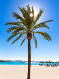 Platja de Alcudia beach in Mallorca Majorca. Platja de Alcudia beach Palm trees in Mallorca Majorca at Balearic islands of Spain Royalty Free Stock Photos