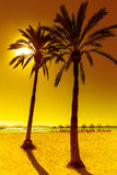 Platja de Alcudia beach in Mallorca Majorca. Platja de Alcudia beach Palm trees in Mallorca Majorca at Balearic islands of Spain Royalty Free Stock Image