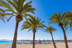 Platja de Alcudia beach in Mallorca Majorca. Platja de Alcudia beach Palm trees in Mallorca Majorca at Balearic islands of Spain Stock Photo