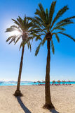 Platja de Alcudia beach in Mallorca Majorca. Platja de Alcudia beach Palm trees in Mallorca Majorca at Balearic islands of Spain Royalty Free Stock Photo