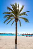 Platja de Alcudia beach in Mallorca Majorca. Platja de Alcudia beach Palm trees in Mallorca Majorca at Balearic islands of Spain Stock Photography