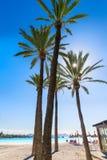 Platja De Alcudia plaża w Mallorca Majorca Obraz Stock