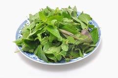Plato de hierbas vietnamitas foto de archivo libre de regalías