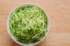 Plato de la ensalada con los brotes jovenes verdes del girasol en fondo de madera imagen de archivo libre de regalías