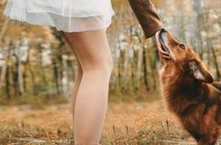 Plato en el tGirl que frota ligeramente un perro capaz fotografía de archivo