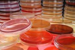 Platos de Petri   Imagen de archivo
