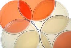 Platos de Petri Imagen de archivo libre de regalías