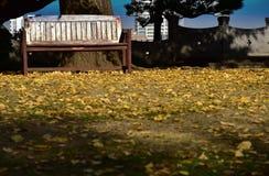 Plats av bänken av parkera Royaltyfri Bild