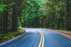 Plats av den härliga vägen till mer regnig nationalpark för mt, enig statistik Royaltyfri Fotografi