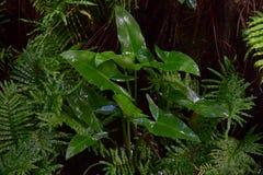 Plats efter regn i tropisk skog Arkivfoton