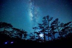 Plats för natthimmel i skog med den mjölkaktiga vägen royaltyfria foton