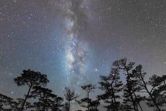 Plats för natthimmel i skog med den mjölkaktiga vägen Arkivfoto