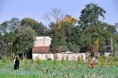 plats för pengzhou för porslinlantgårdpastorale Royaltyfri Bild